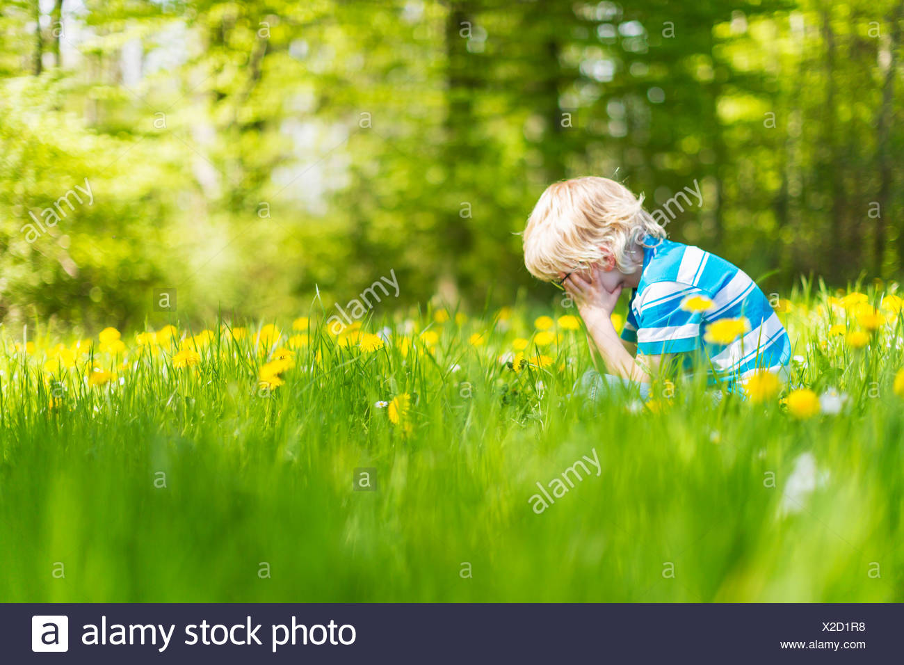 Boy sitting in field of tall grass - Stock Image