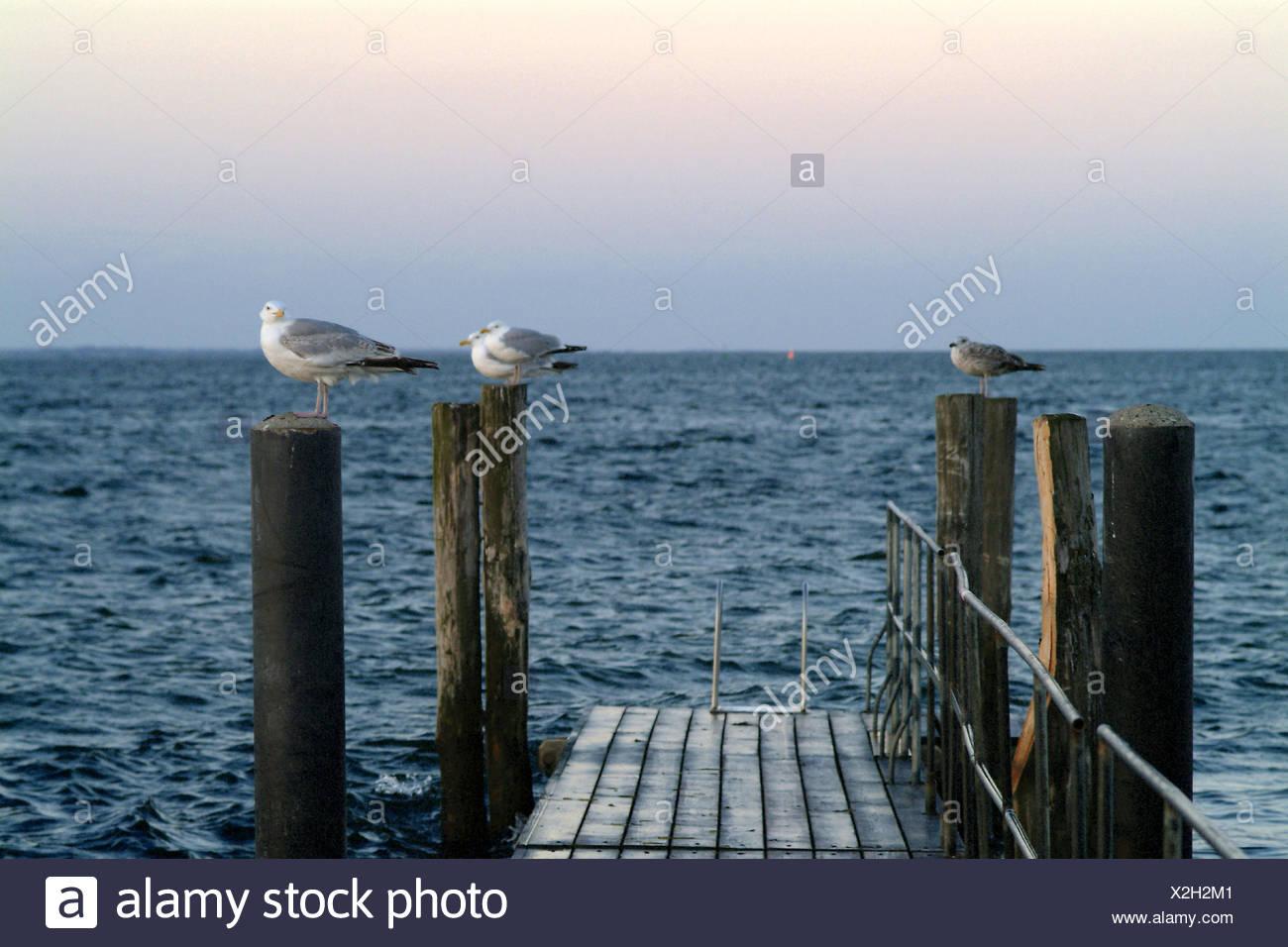 Germany, Schleswig - Holstein, island Fehmarn, Fehmarn sound, wooden ...