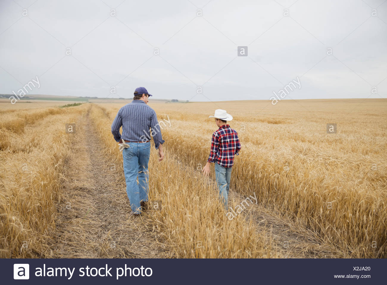 Father and son walking down lane through field - Stock Image