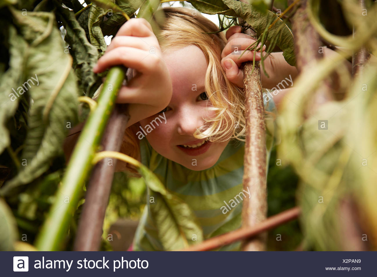 Close up portrait of girl hiding in bushes - Stock Image