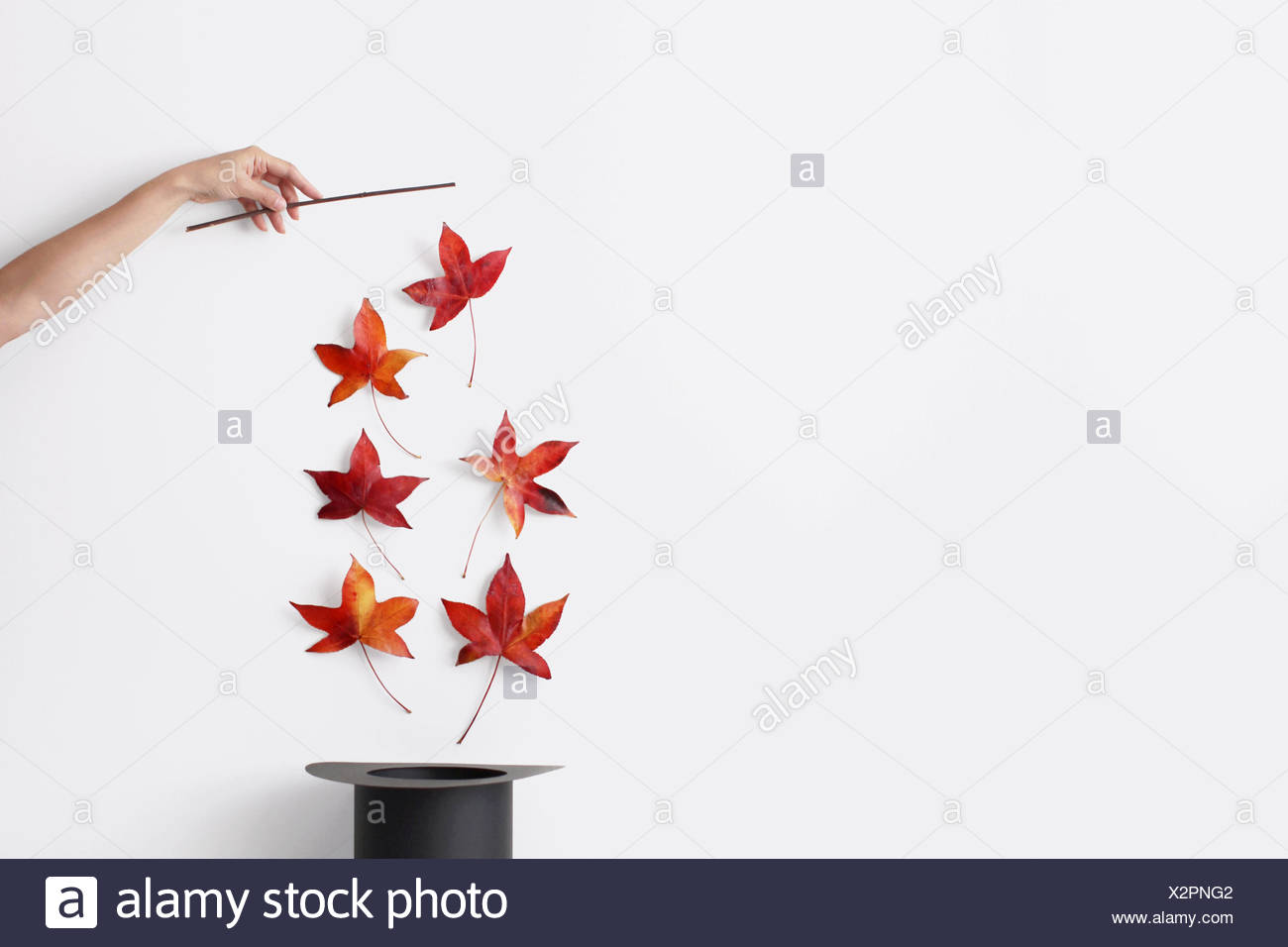 Woman's hand holding a magic wand pulling autumn leaves out of a hat - Stock Image