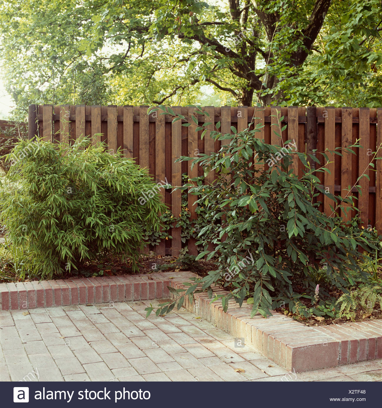 Raised brick edging on garden border with Arundinaria against wooden ...