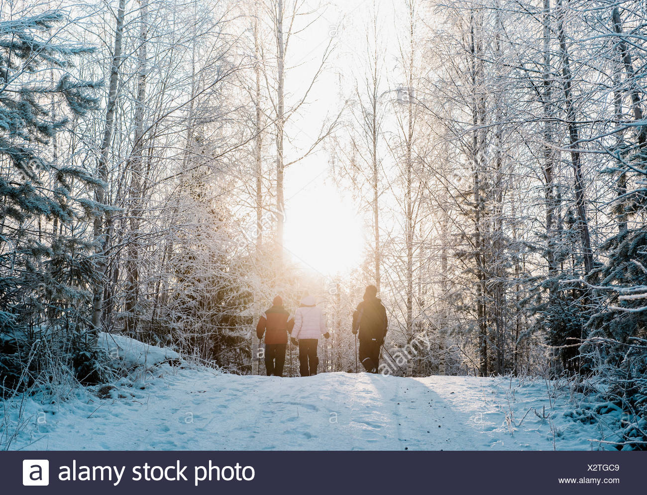 Three people nordic walking in snow covered forest - Stock Image