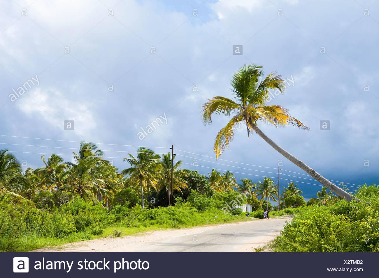 Palm trees along road, Ponta Morrungulo, Inhambane Province, Mozambique - Stock Image