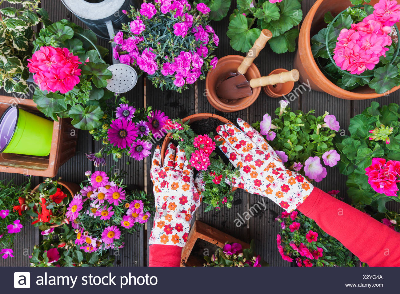 Gardening Different Spring And Summer Flowers Flower Box And