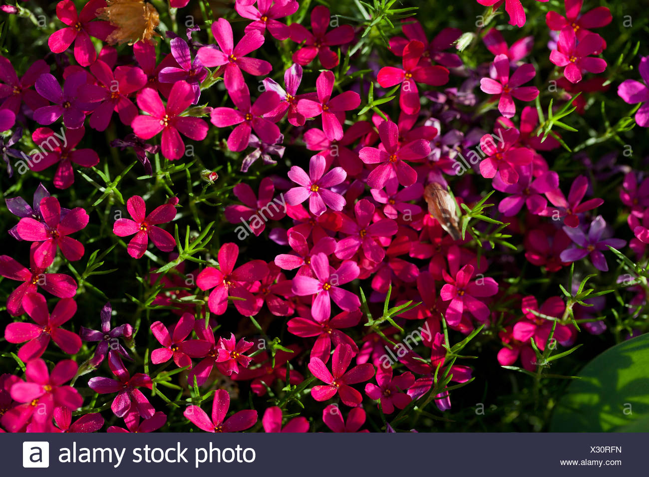 Flower Flowers Plant Small Tiny Little Short Purple Pink