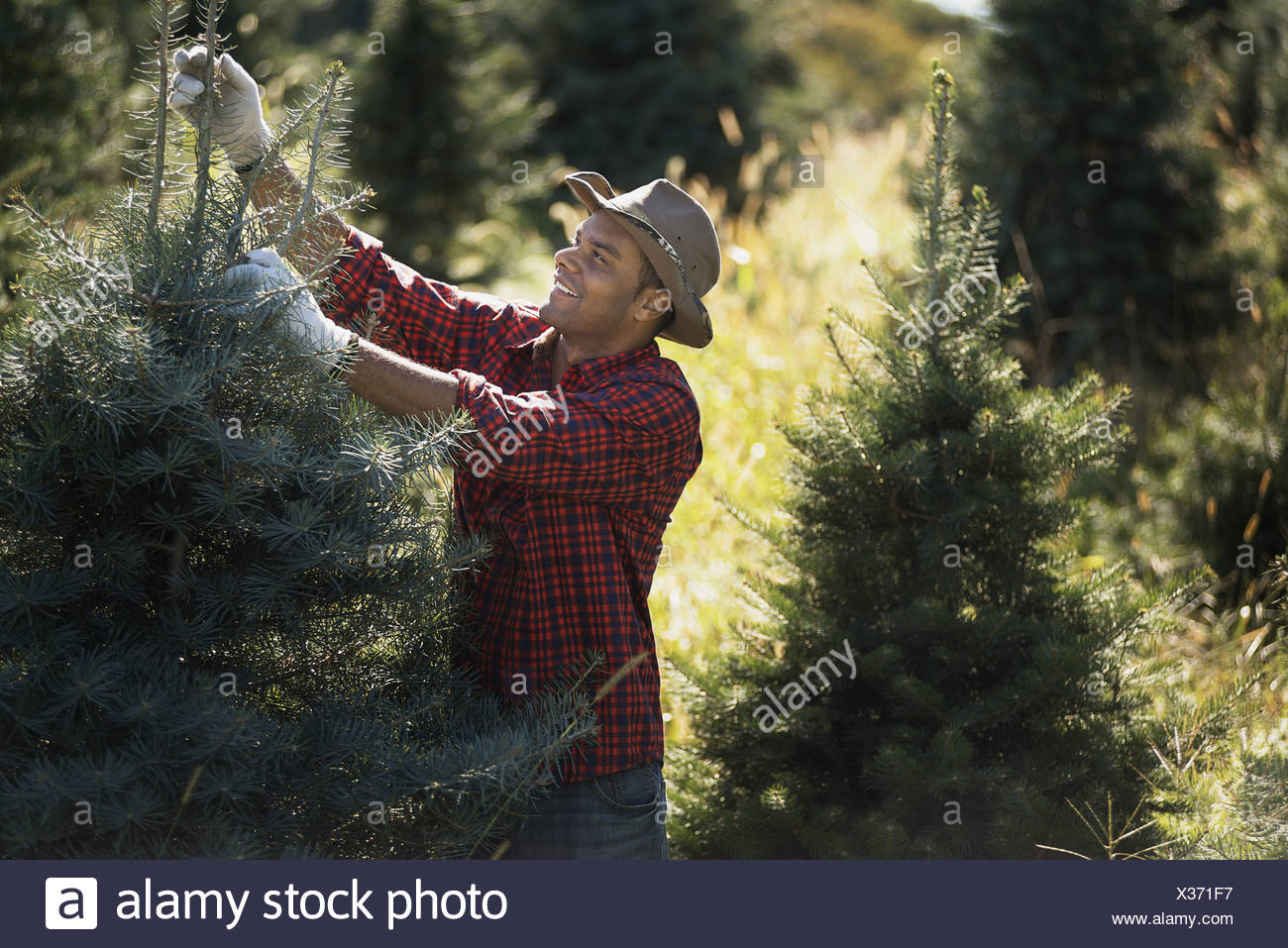 South Carolina Christmas Tree Farms