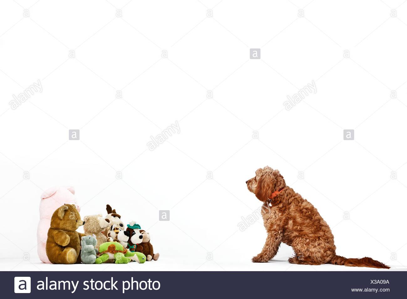 Dog facing soft toys - Stock Image