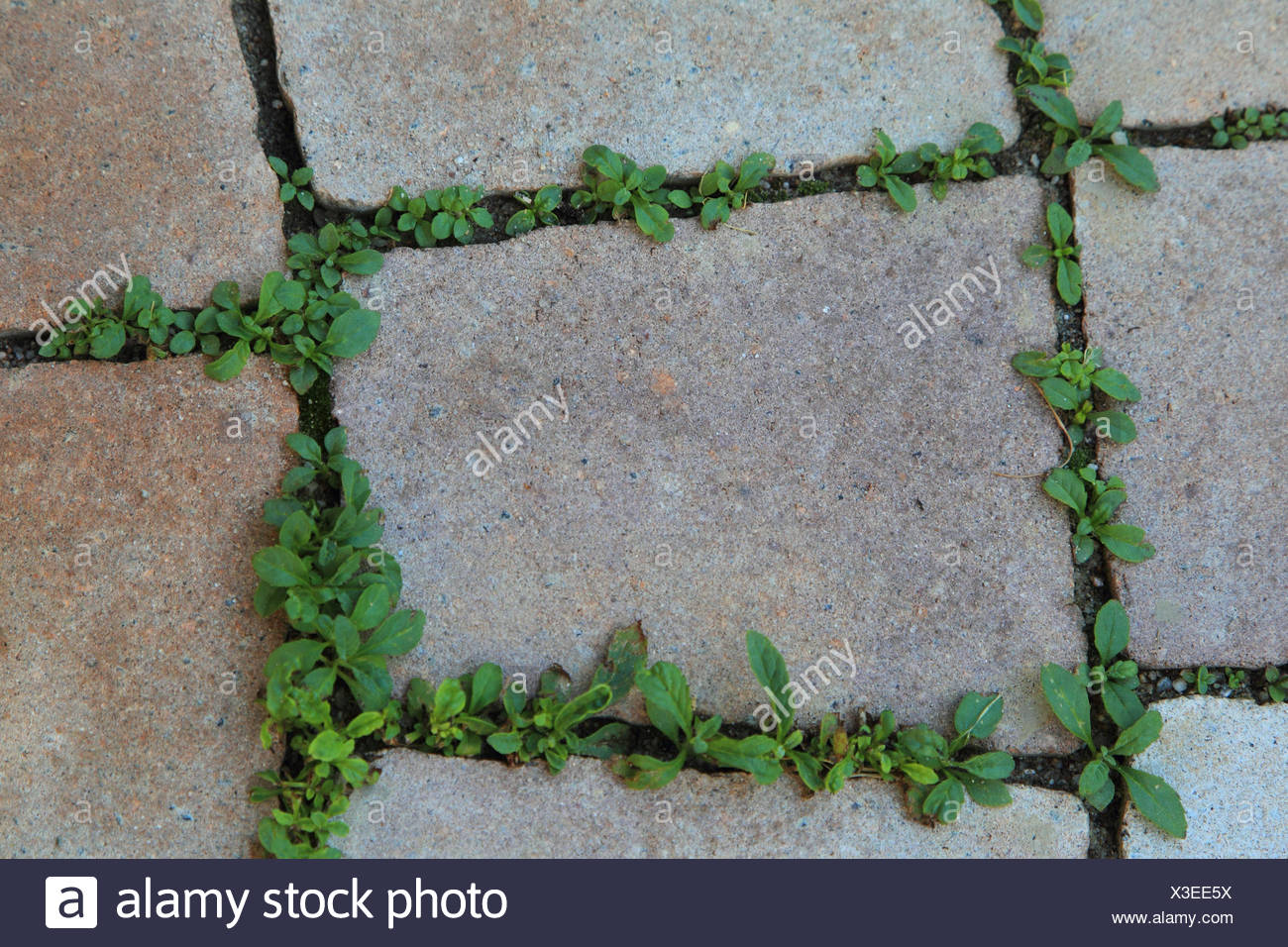 Paving-stones, weed, green, landscape format, garden, stones, plant, to scratches, - Stock Image