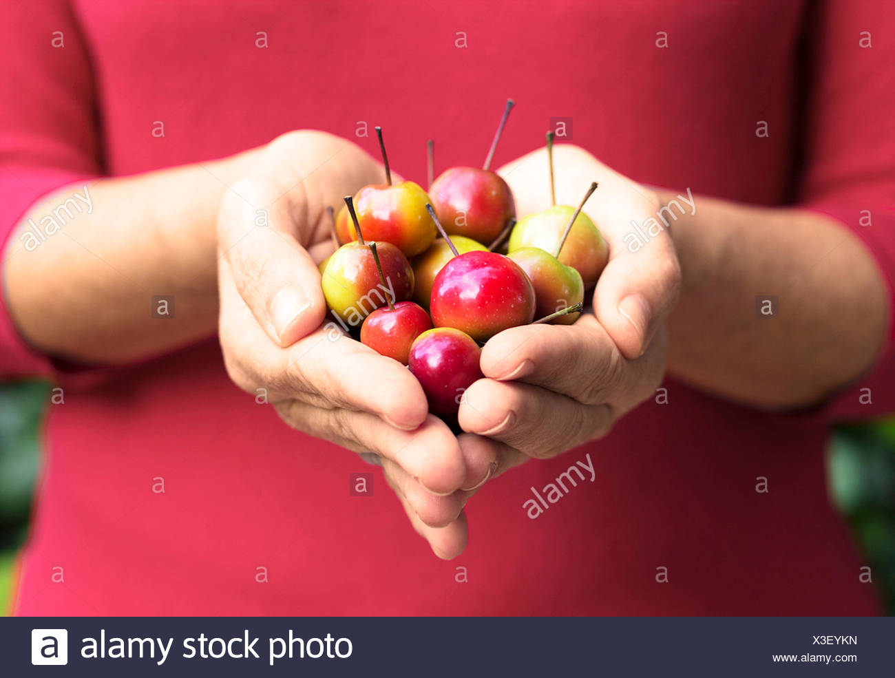 Small red apples - Stock Image