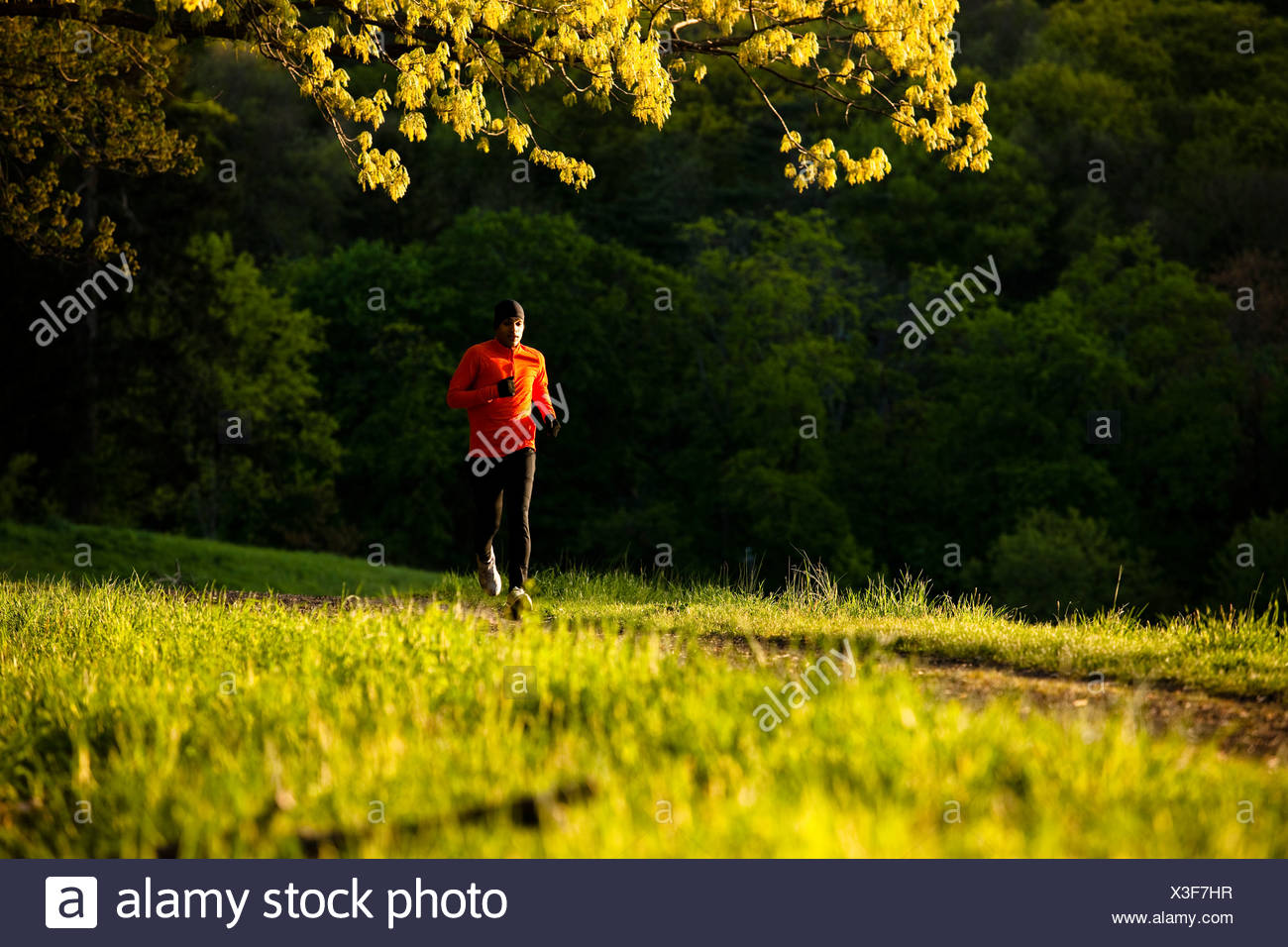 A man wearing an orange shirt runs along a trail in Rockefeller State Park in Sleepy Hollow, New York. - Stock Image