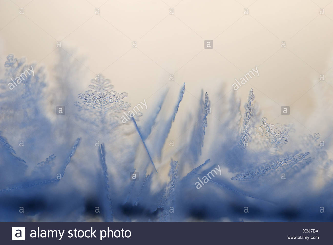 Soft frost patterns - Stock Image