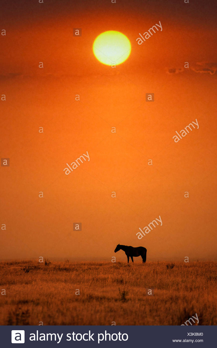 Horse, horses, Grand Teton, National Park, Wyoming, USA, United States, America, free, animal, landscape, prairie, sunset - Stock Image