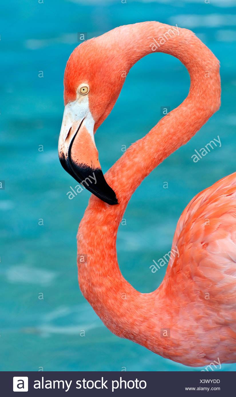 animal bird wild - Stock Image
