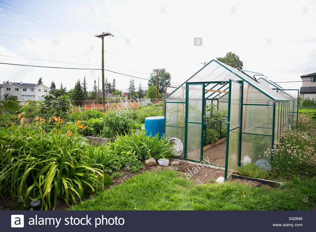 Greenhouse in community garden - Stock Image