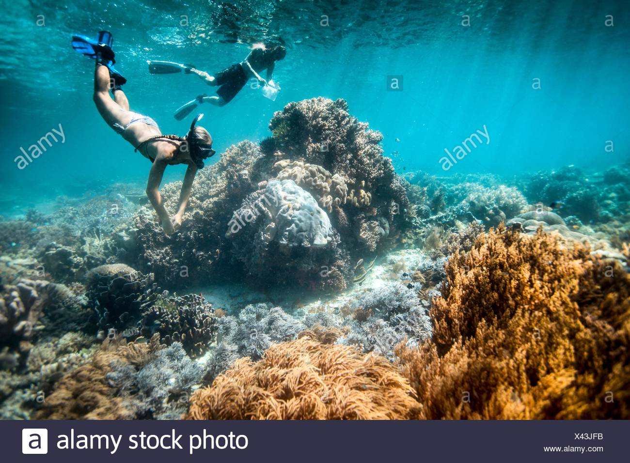 Two snorkelers perform scientific surveys on coral reef and fish, Raja Ampat, West Papua, Indonesia - Stock Image