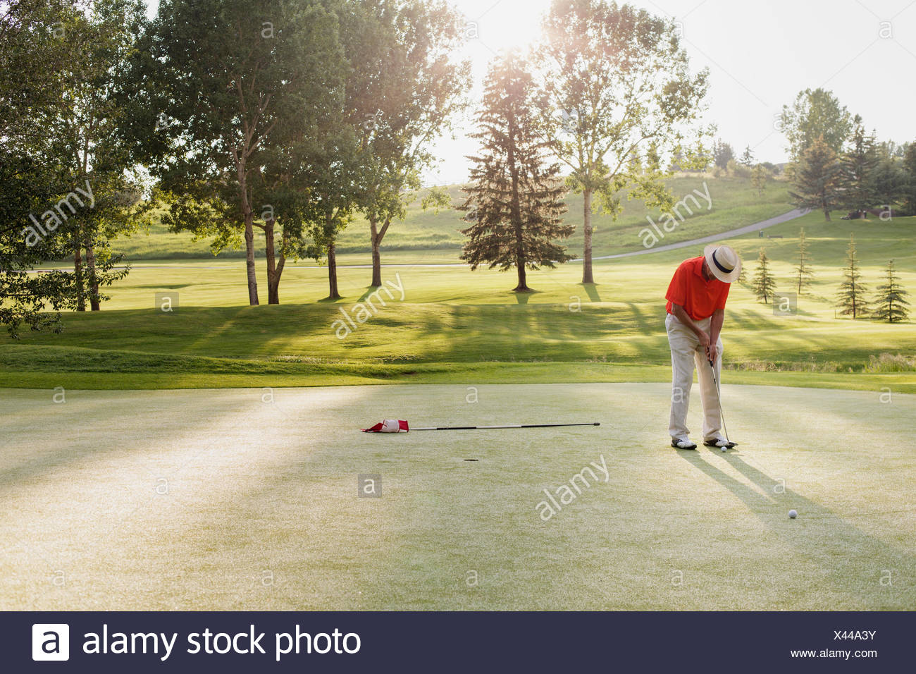 senior man about to putt on golf green - Stock Image