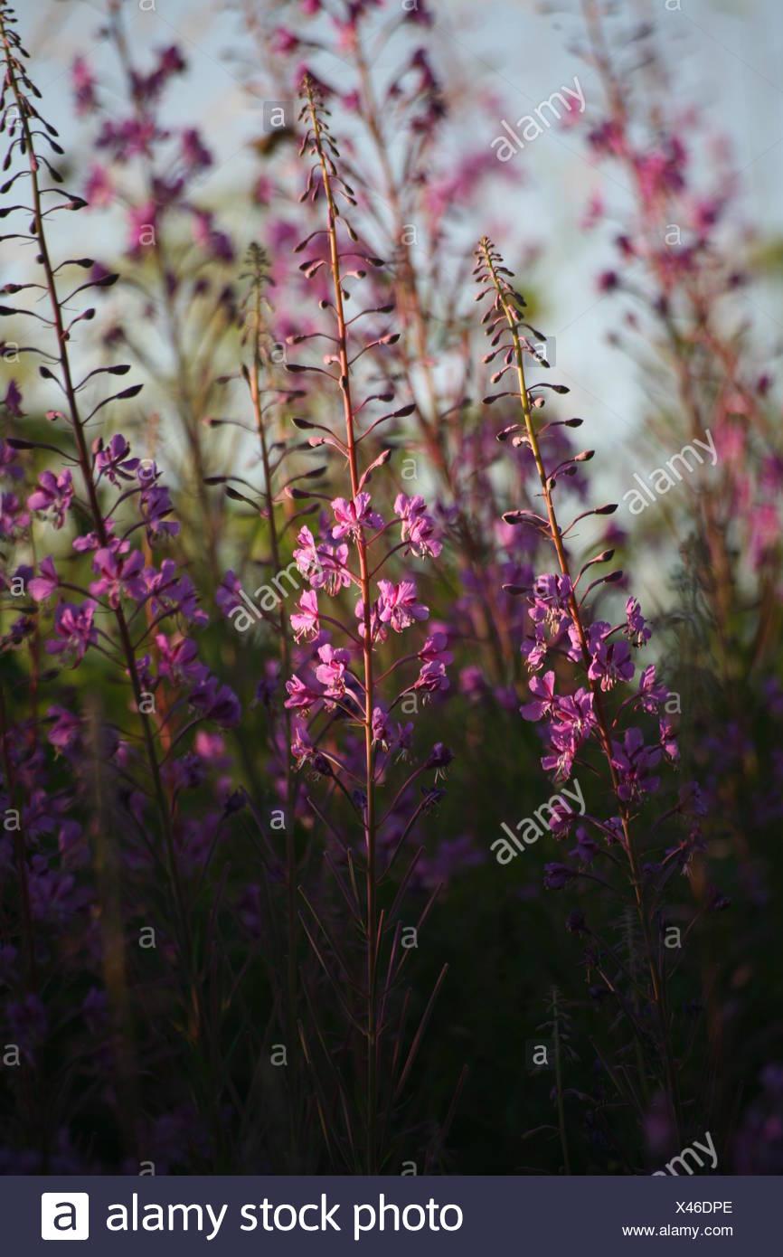 Flower Plant Green Bloom Blossom Flourish Flourishing Flora Wayside