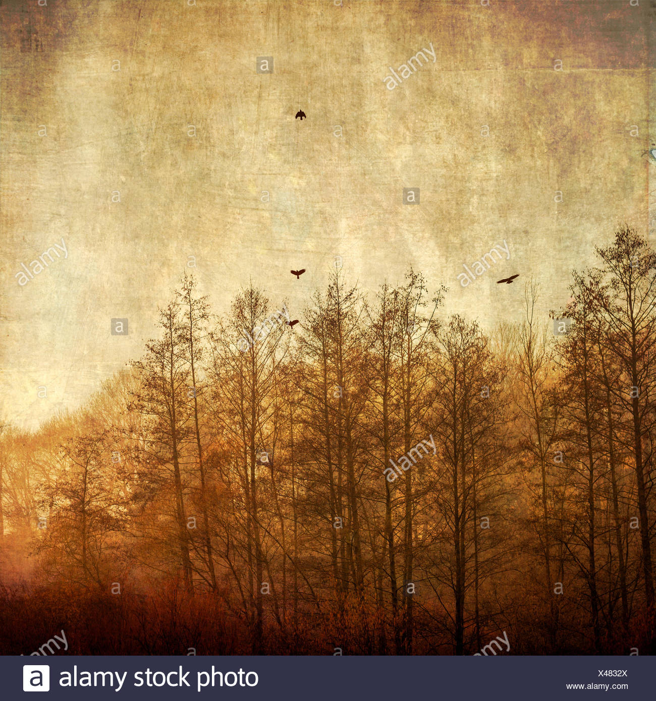 Trees and flying birds in the morning light, textured effect - Stock Image