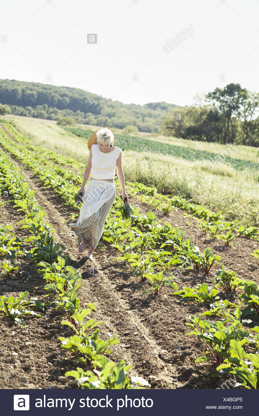 Maryland USA girl harvesting beets fresh vegetables - Stock Image