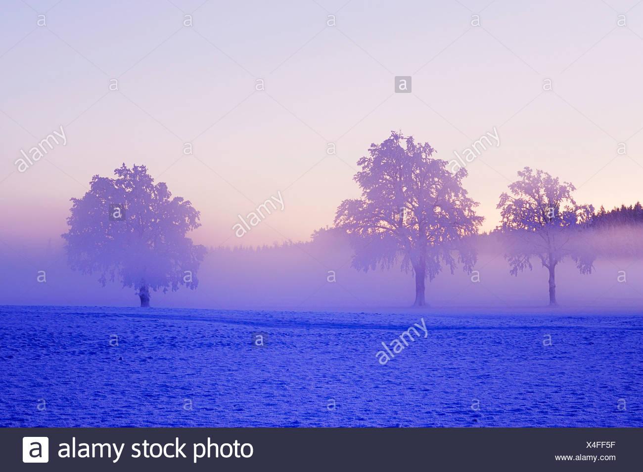 Winter landscape shrouded in fog, Horben, Aargau, Switzerland, Europe - Stock Image