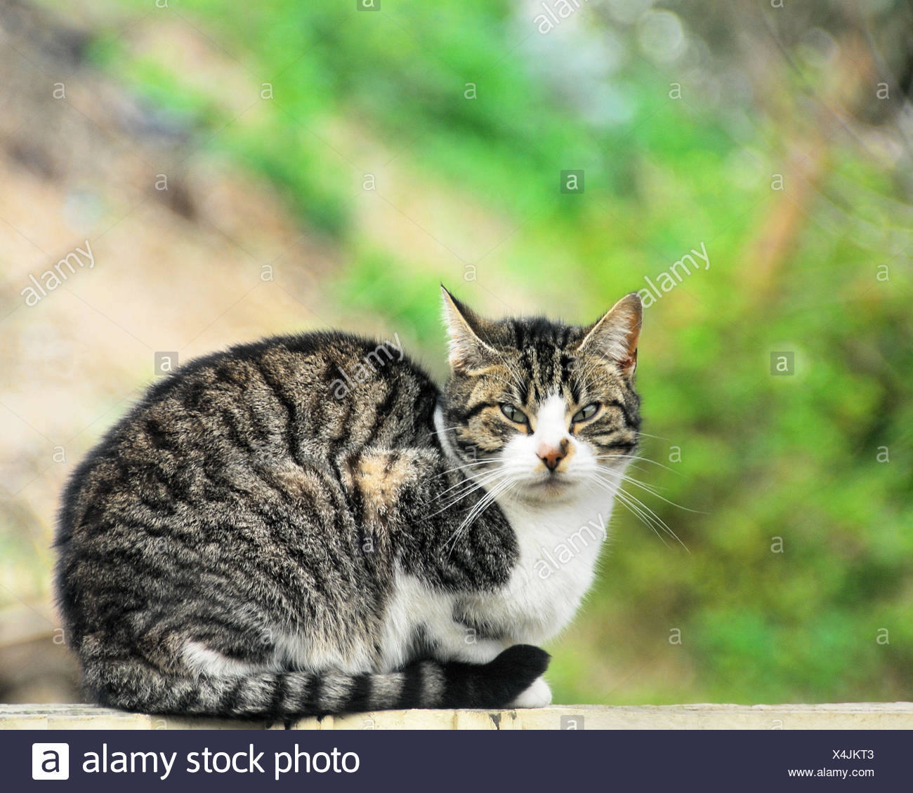 Portrait of sweet tabby cat - Stock Image