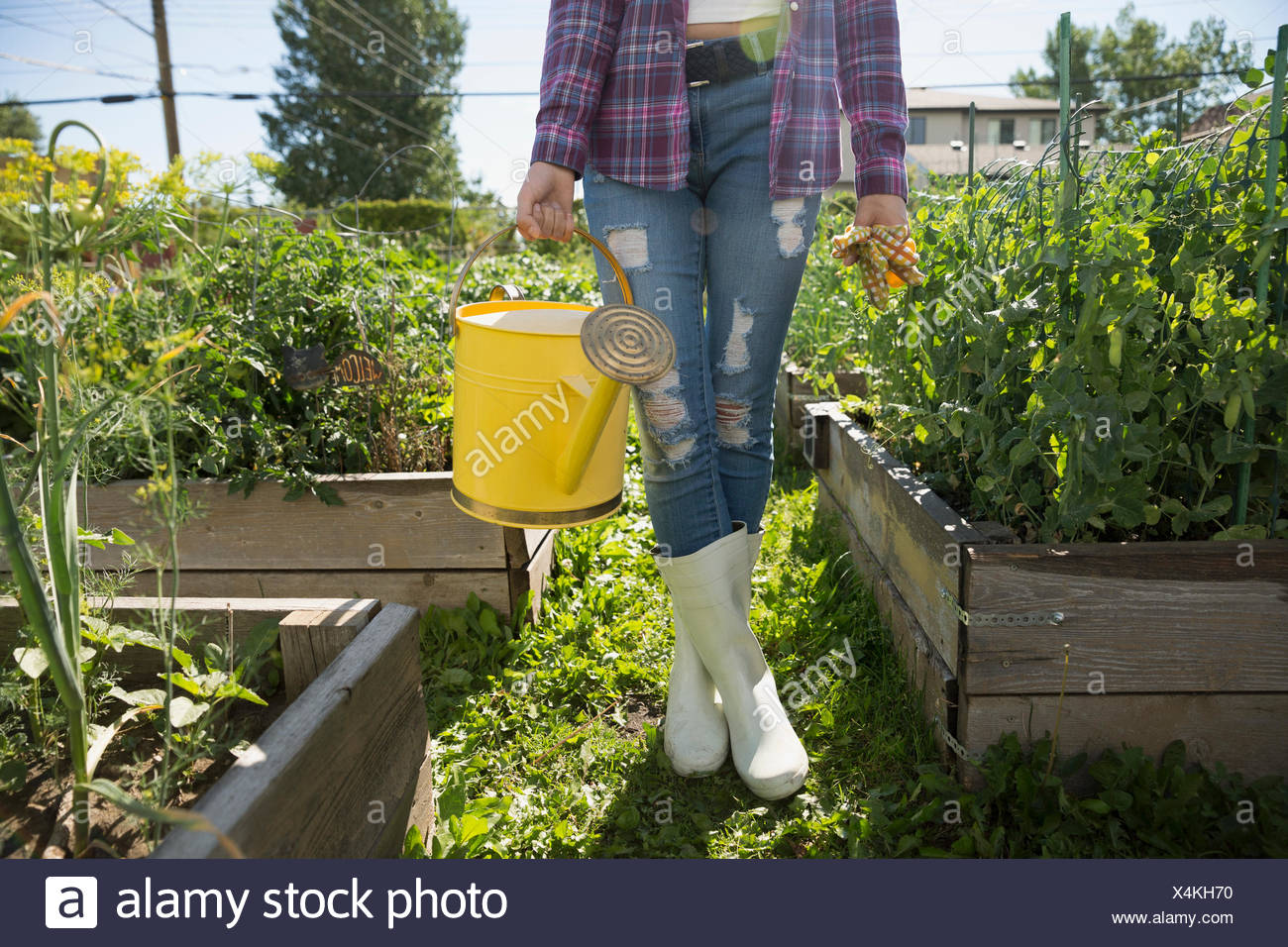 Young woman wellingtons holding watering can garden - Stock Image