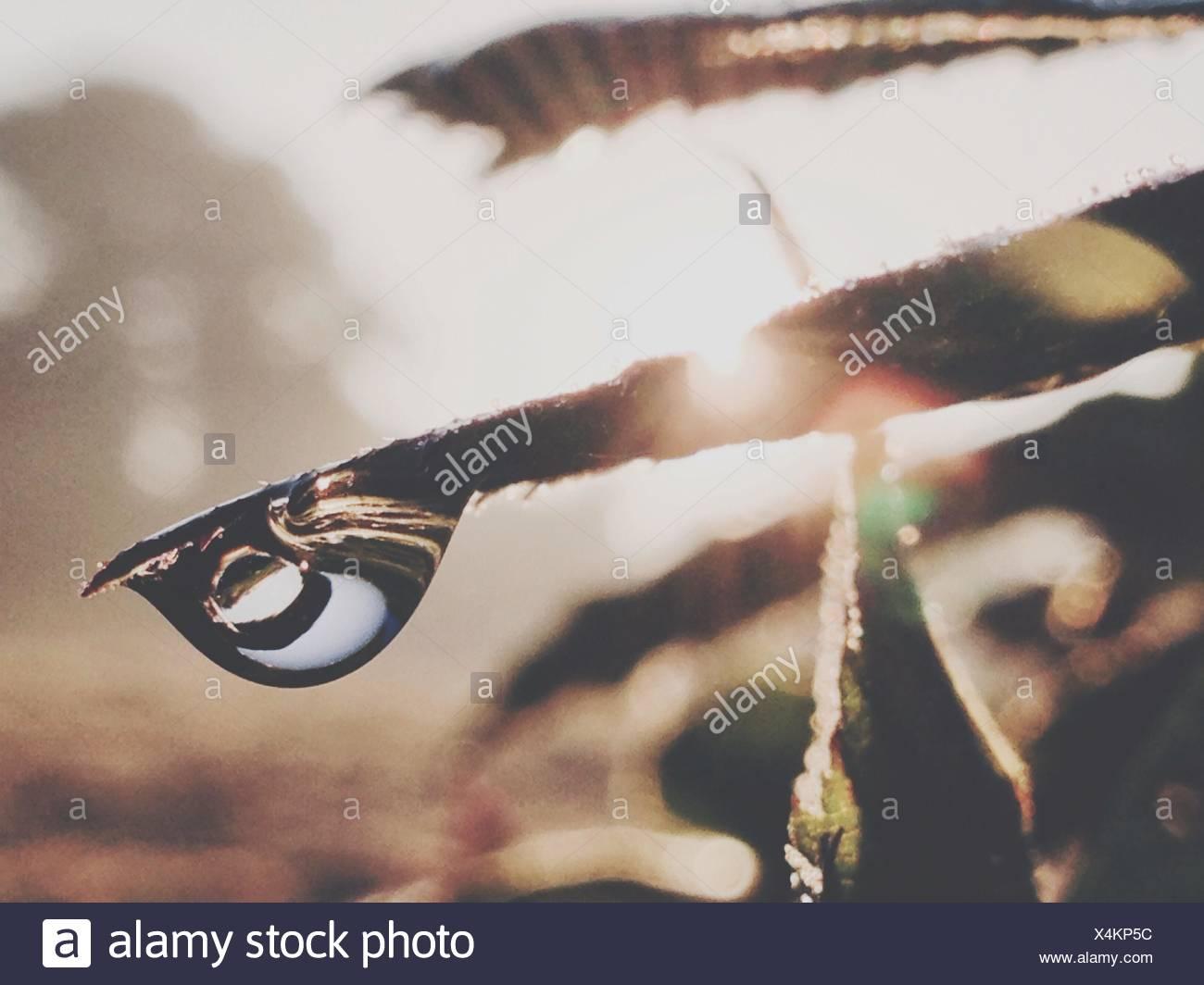 Close-Up Of Rain Drop On Grass - Stock Image
