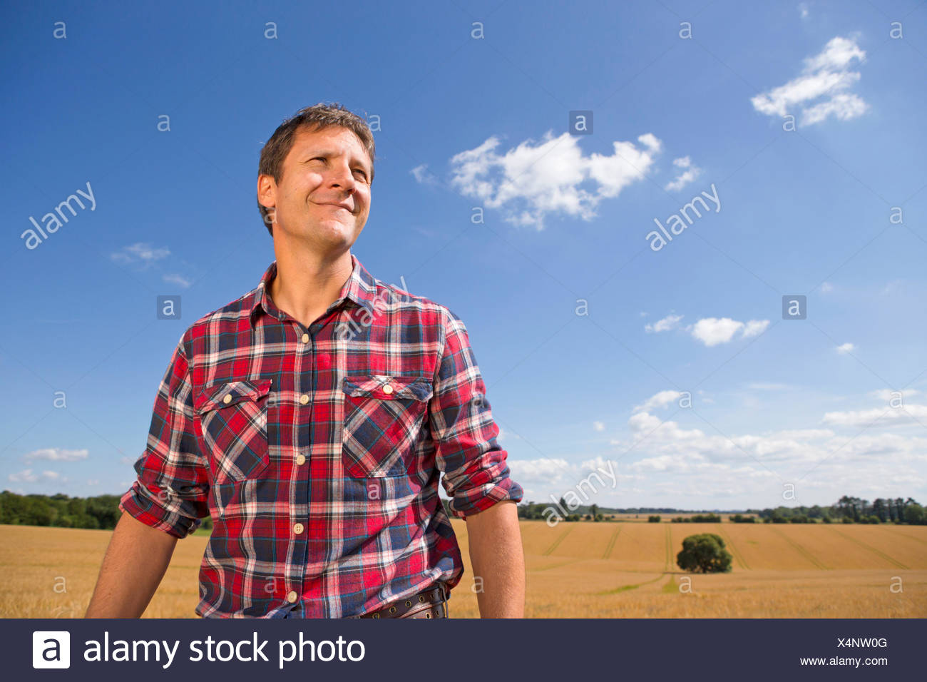 Smiling farmer in sunny rural barley crop field in summer - Stock Image