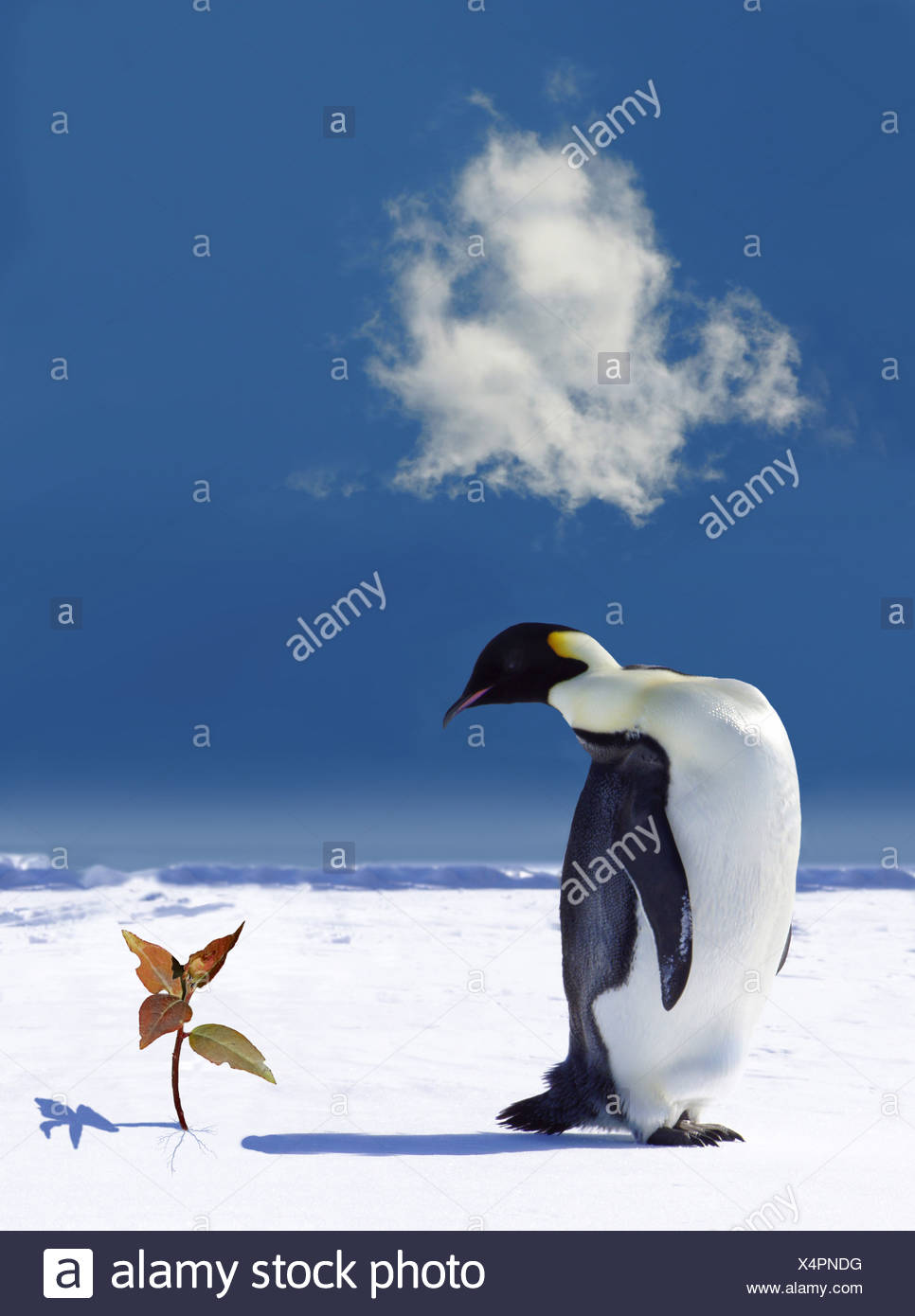 Global warming in Antarctica - Stock Image