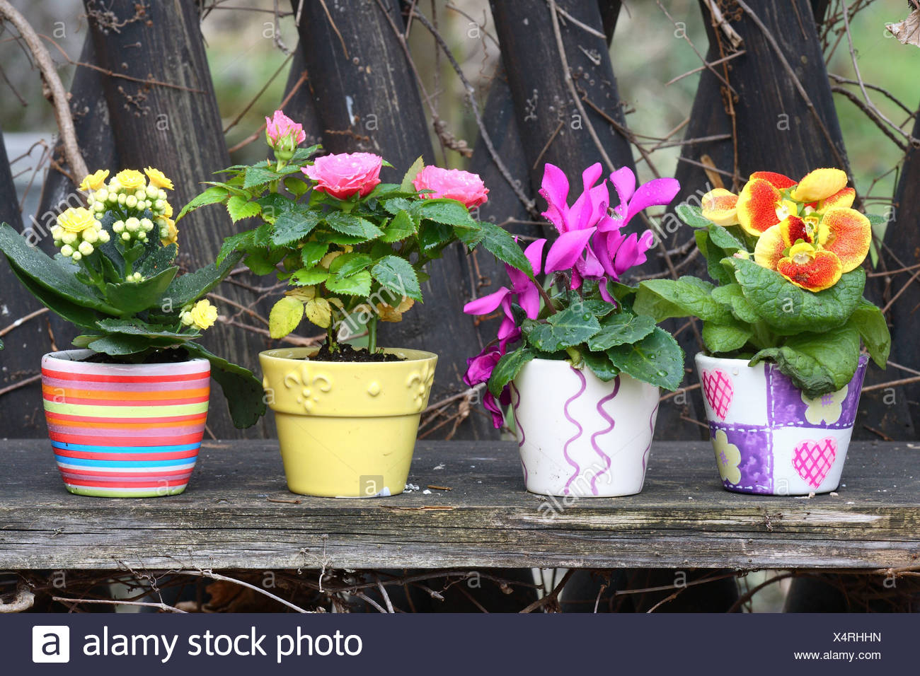 Planters Colorfully Cyclamens Slipper Flower Kalanchoe Rose