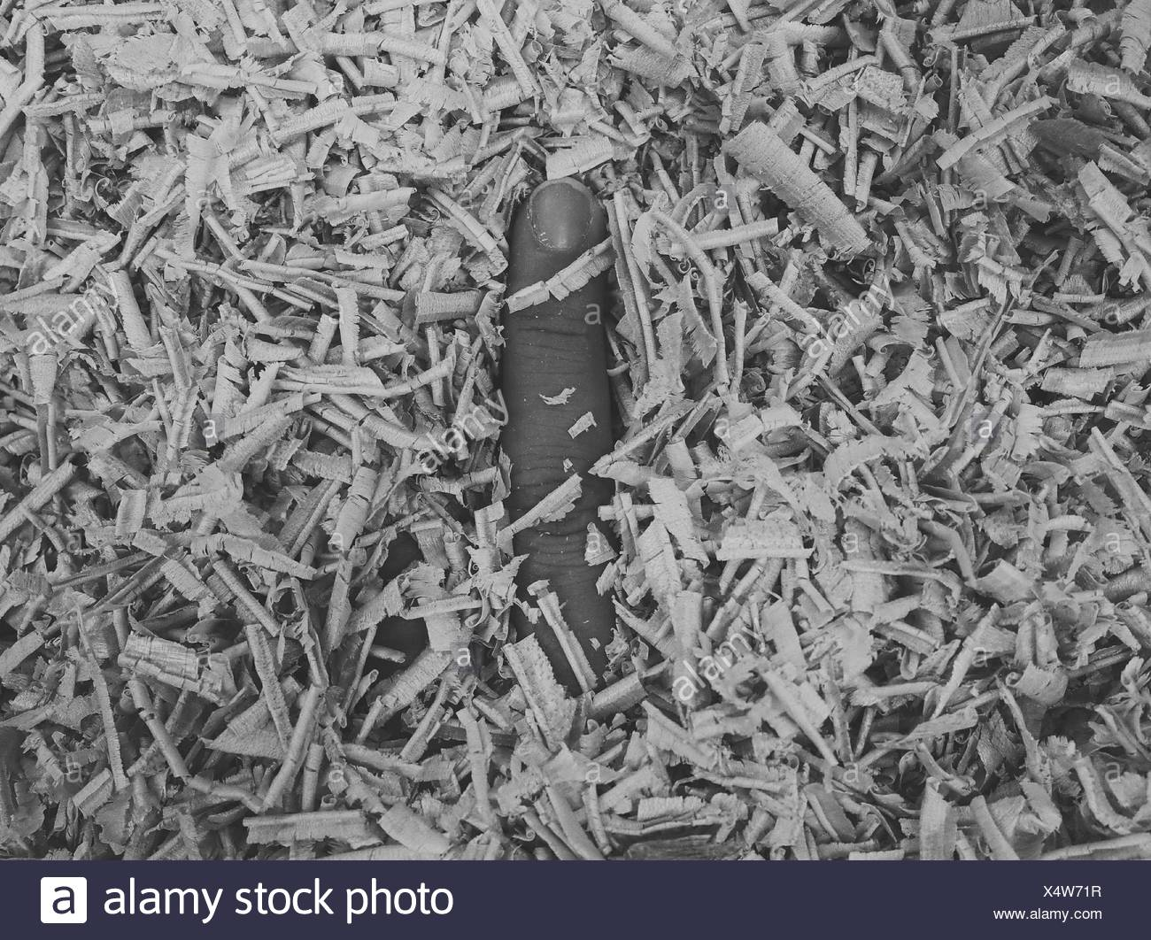 Person's Finger In Sawdust - Stock Image