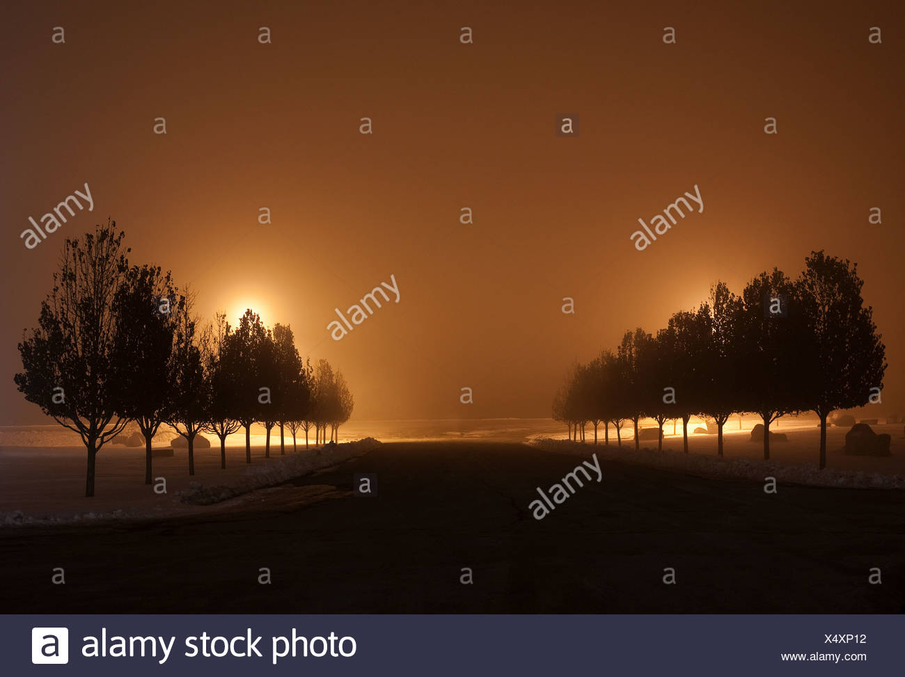 Rows of trees at night - Stock Image