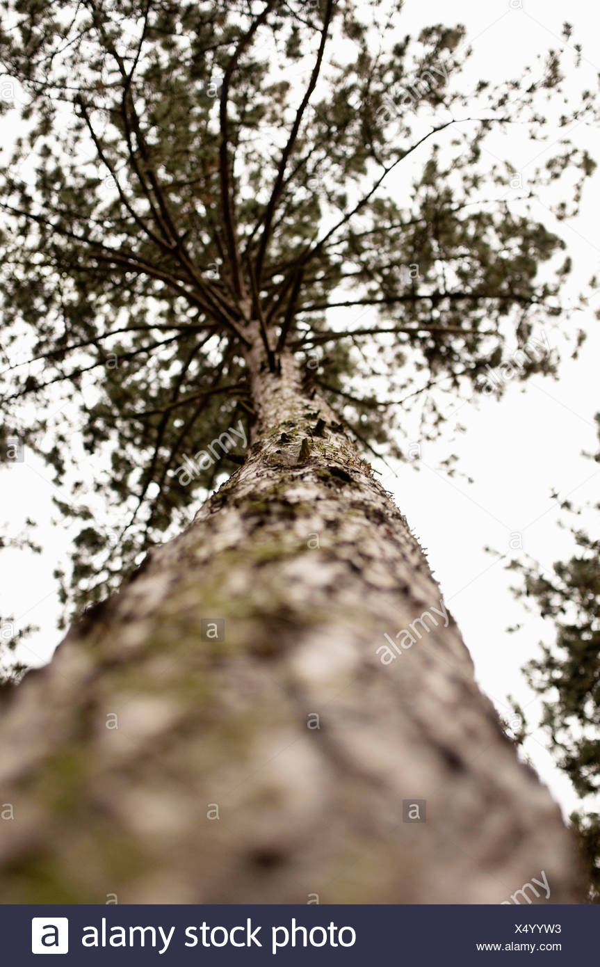 Closeup on tree from below - Stock Image