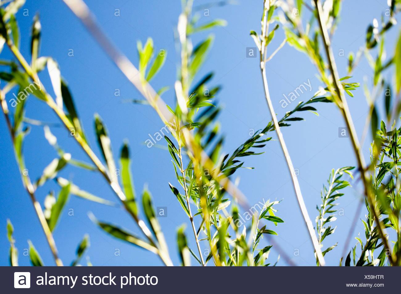 Closeup on vegetation - Stock Image