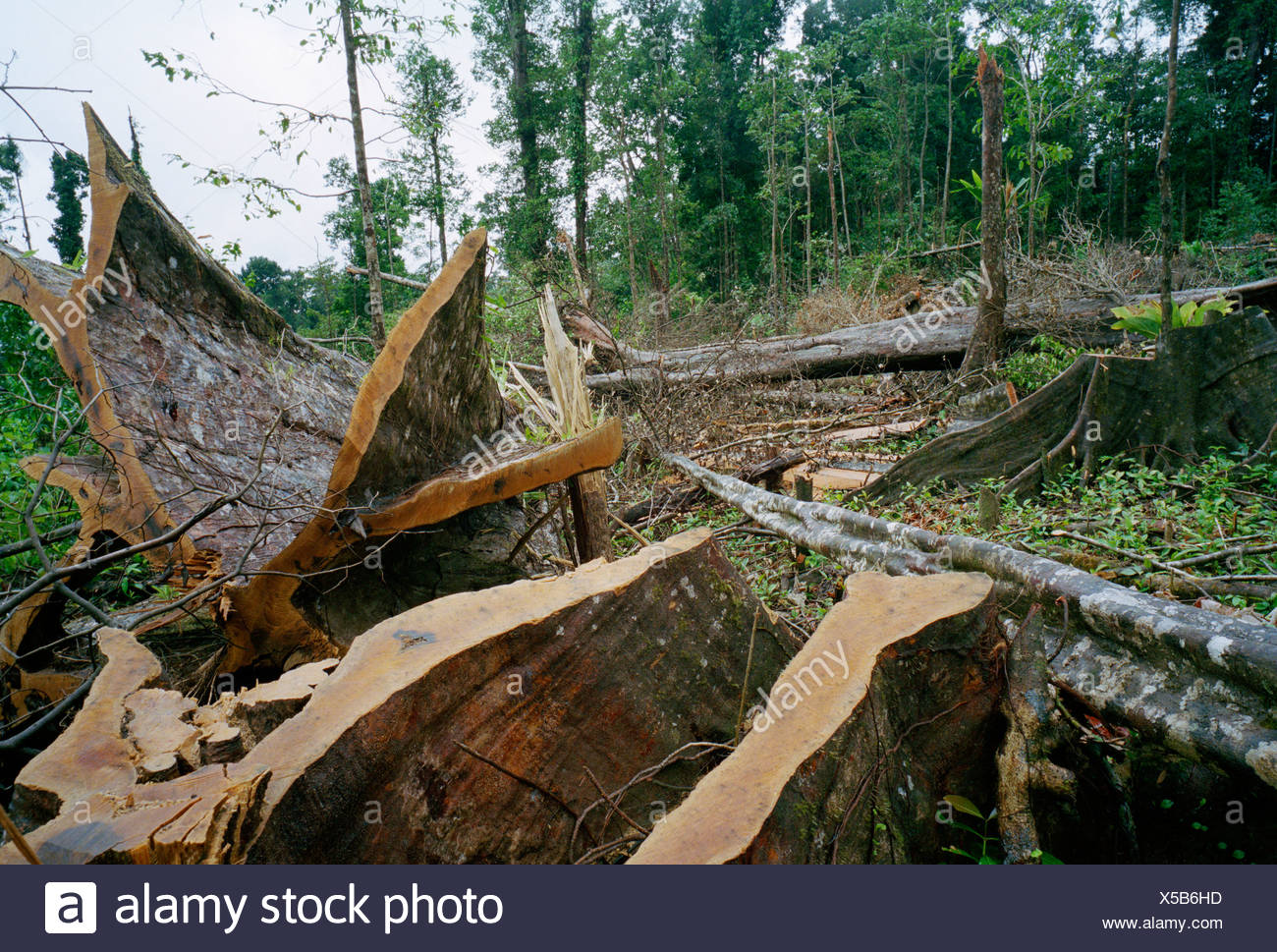 RAINFOREST DESTROYED - Stock Image