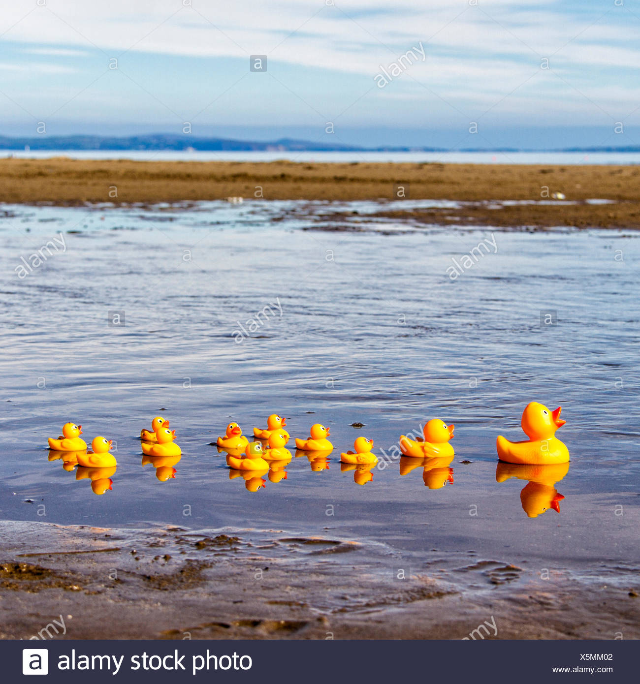 Toy ducks on the beach in a row - Stock Image