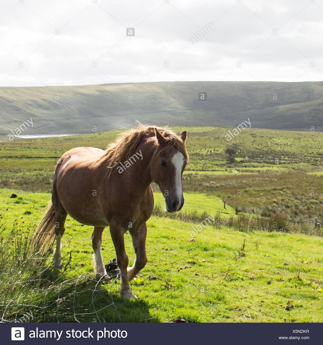 Horse in countryside - Stock Image
