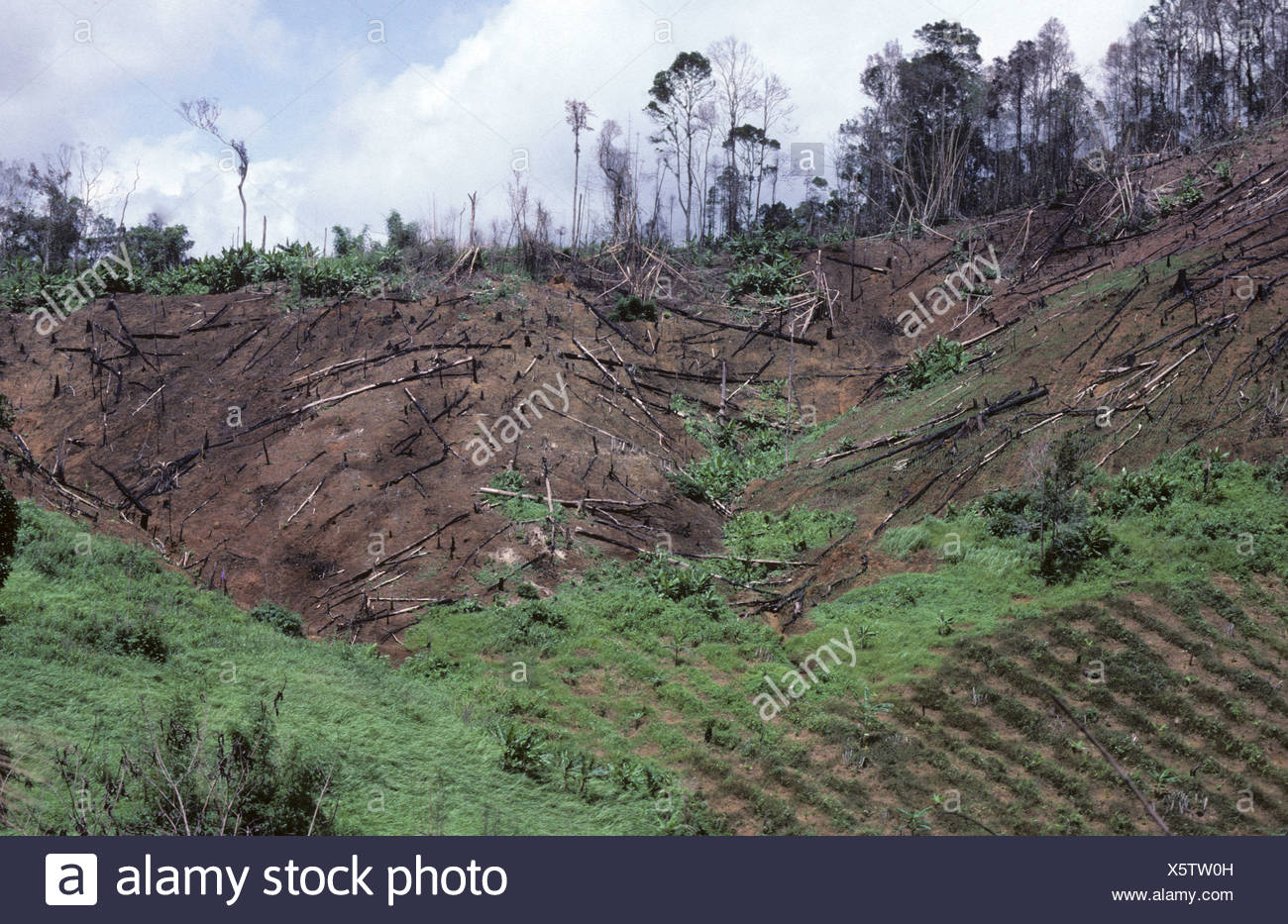 Rainforest deforestation slash and burn in Thailand showing cropping on lower slopes - Stock Image