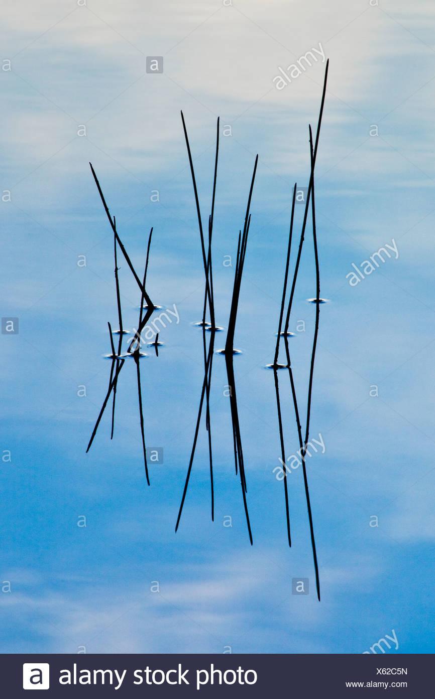 Reeds reflecting in Vermillion Lake - Stock Image