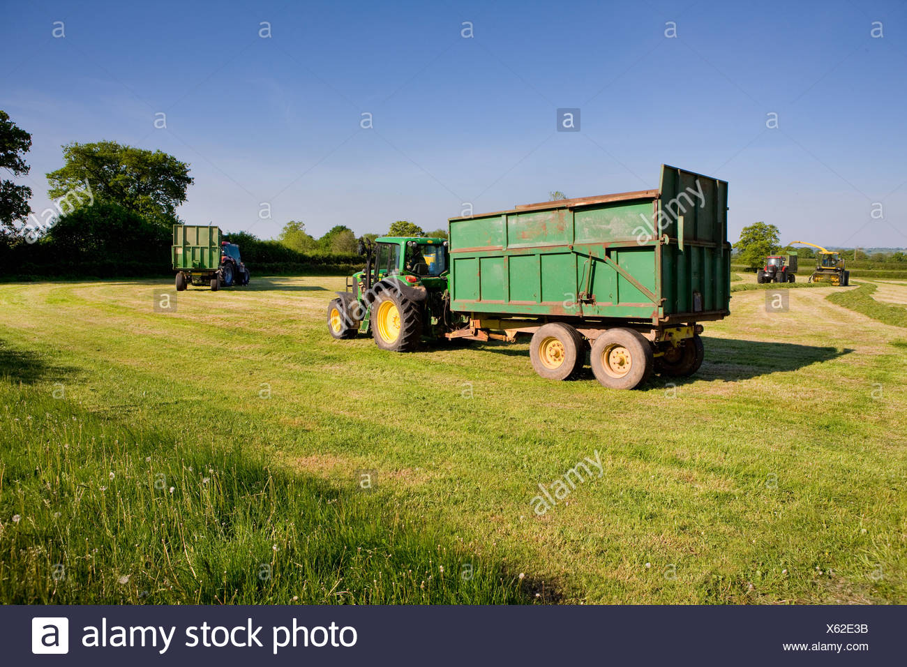Tractor harvesting silage in farm field - Stock Image