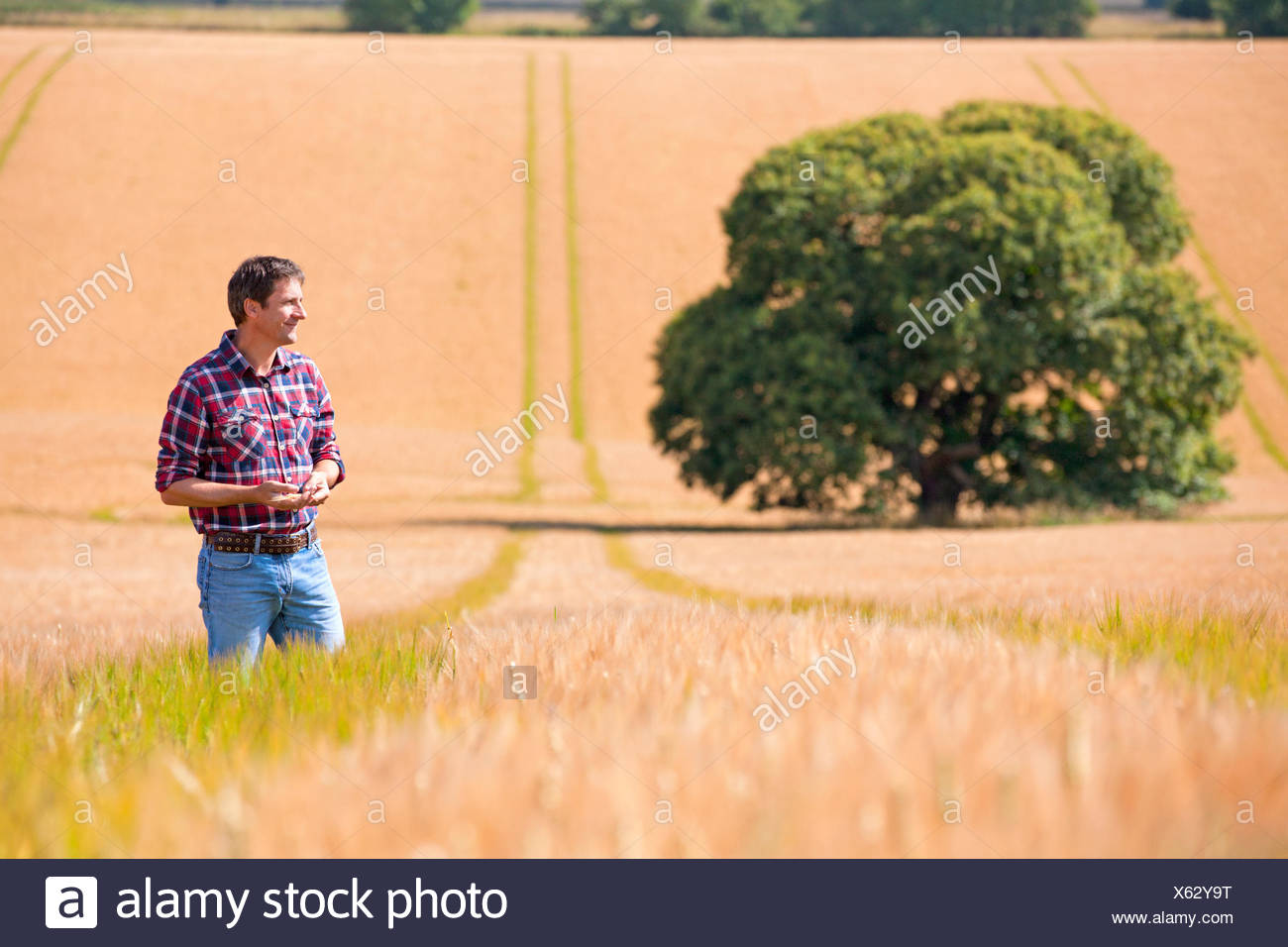 Farmer standing in sunny rural barley crop field in summer - Stock Image