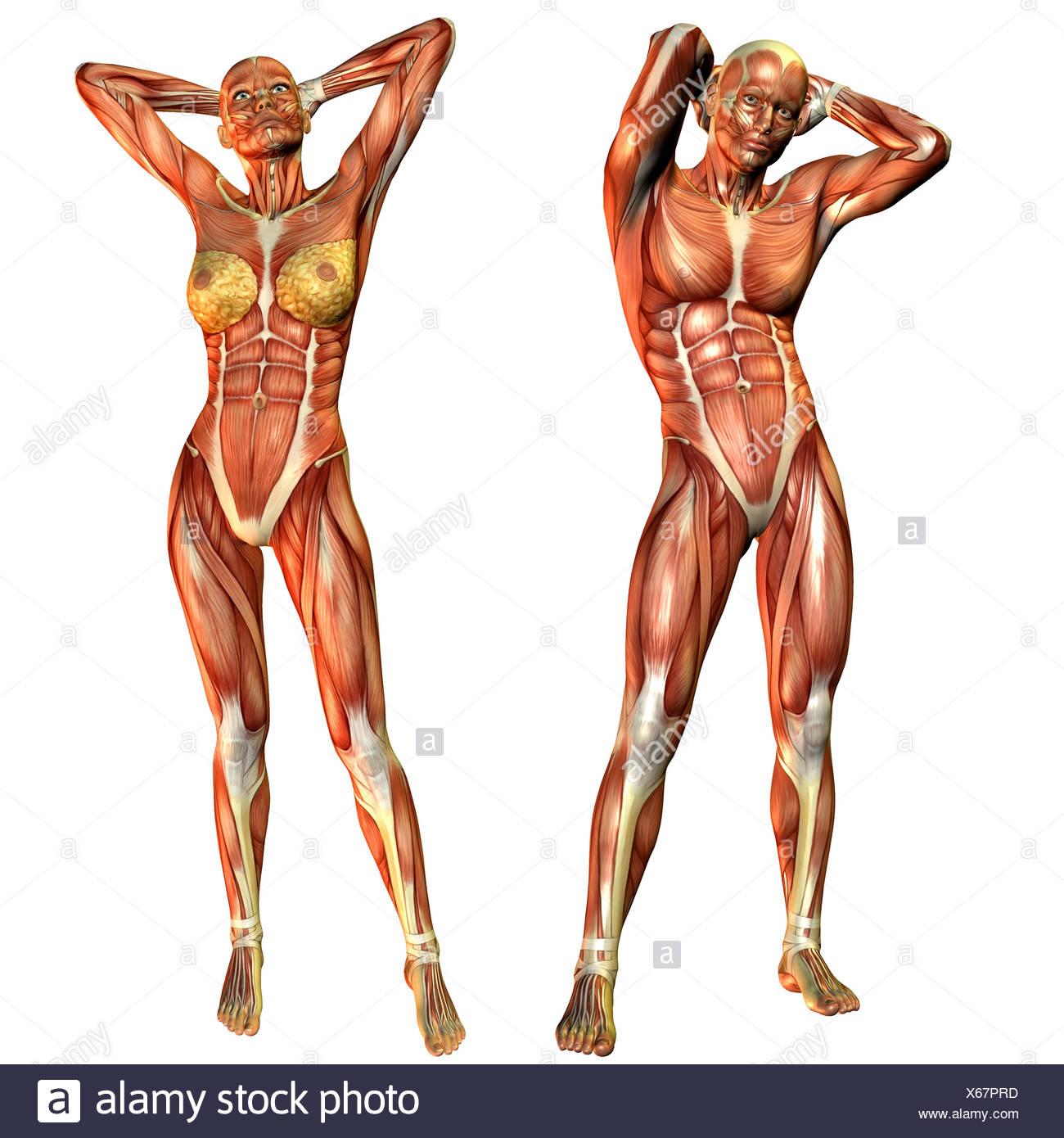 Nett Laterale Muskeln Galerie - Anatomie Ideen - finotti.info