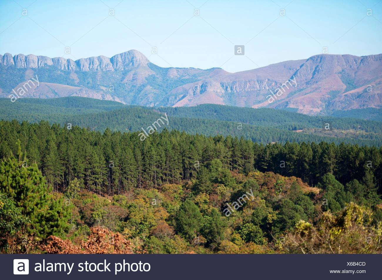 Scenic view witht forest and hills in background, Agatha, Tzaneen district, Limpopo province, South Africa. - Stock Image