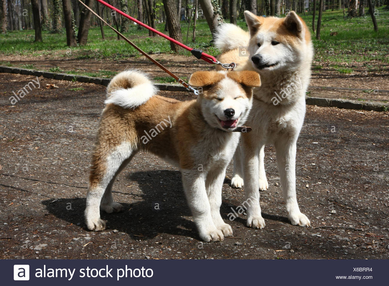 Dogs in public park - Stock Image