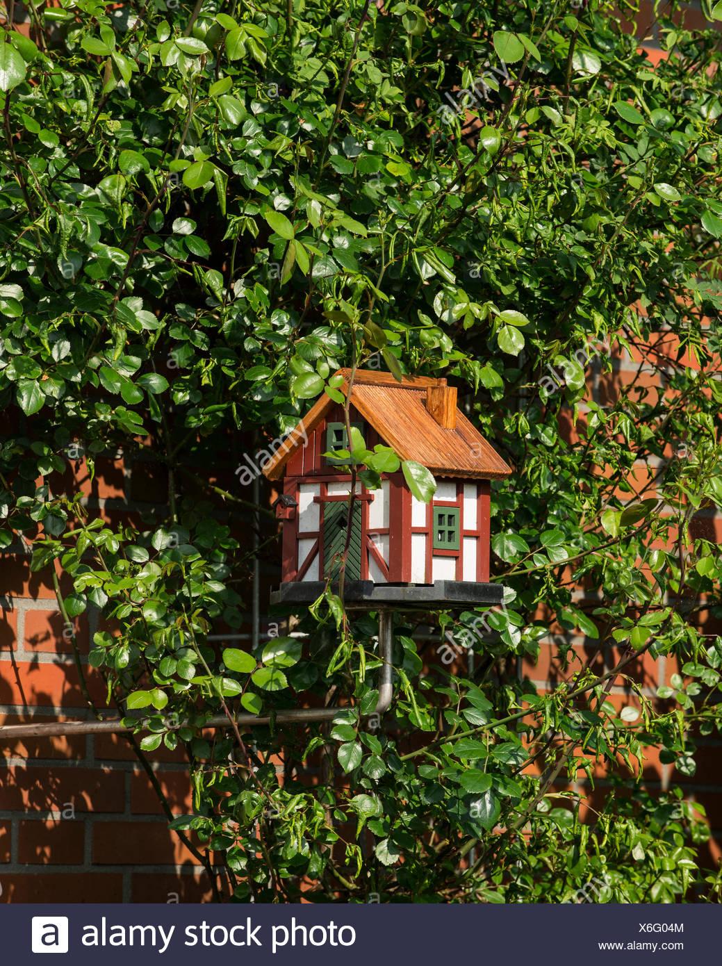 Garden Ornament, Bird House In A Rosebush Trellis Against A House Wall,  Lower Saxony