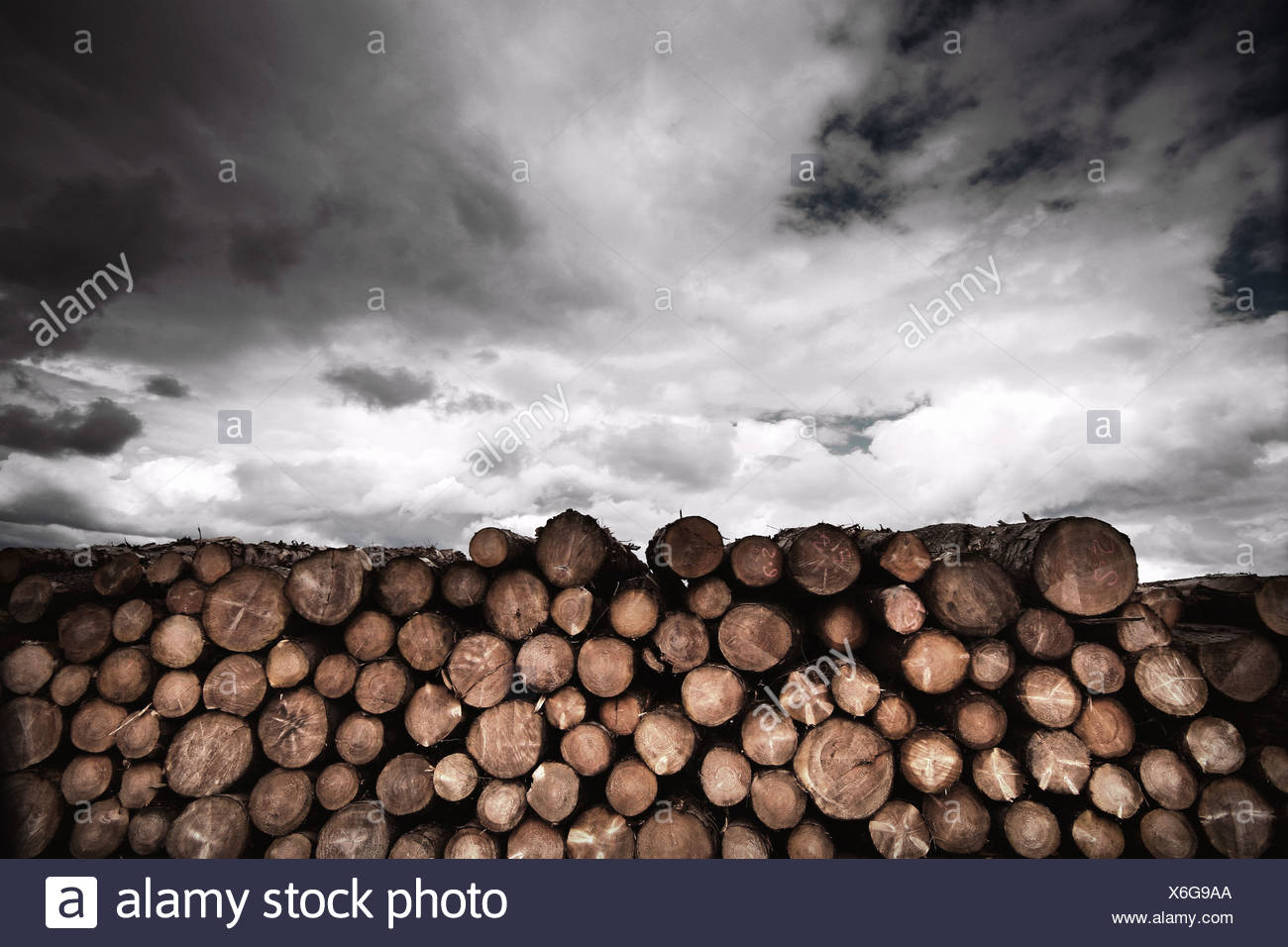 log pile - Stock Image