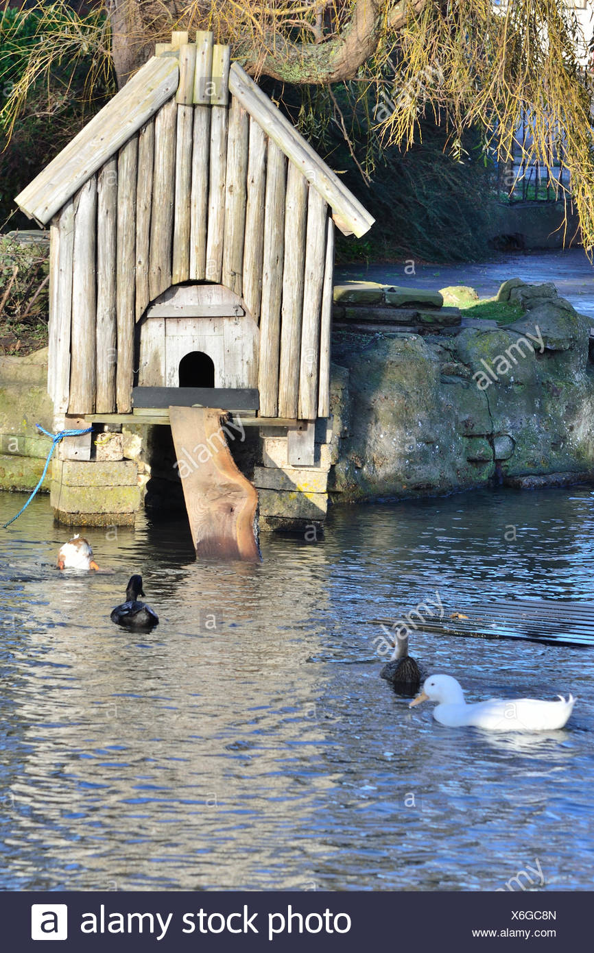 how to build a duck house on a pond