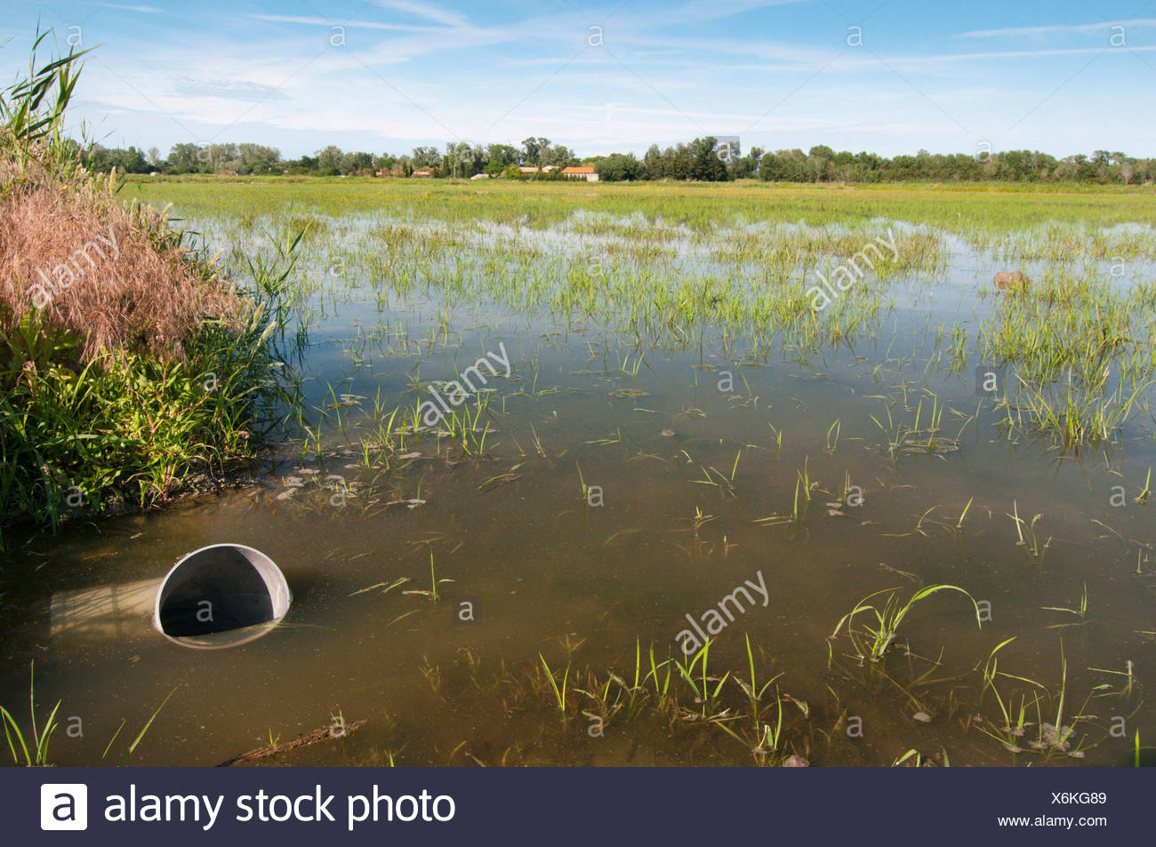 rice cultivation in the Camargue, France, Bouches-du-Rhne, Provence-Alpes-Cote d'Azur, Camargue - Stock Image