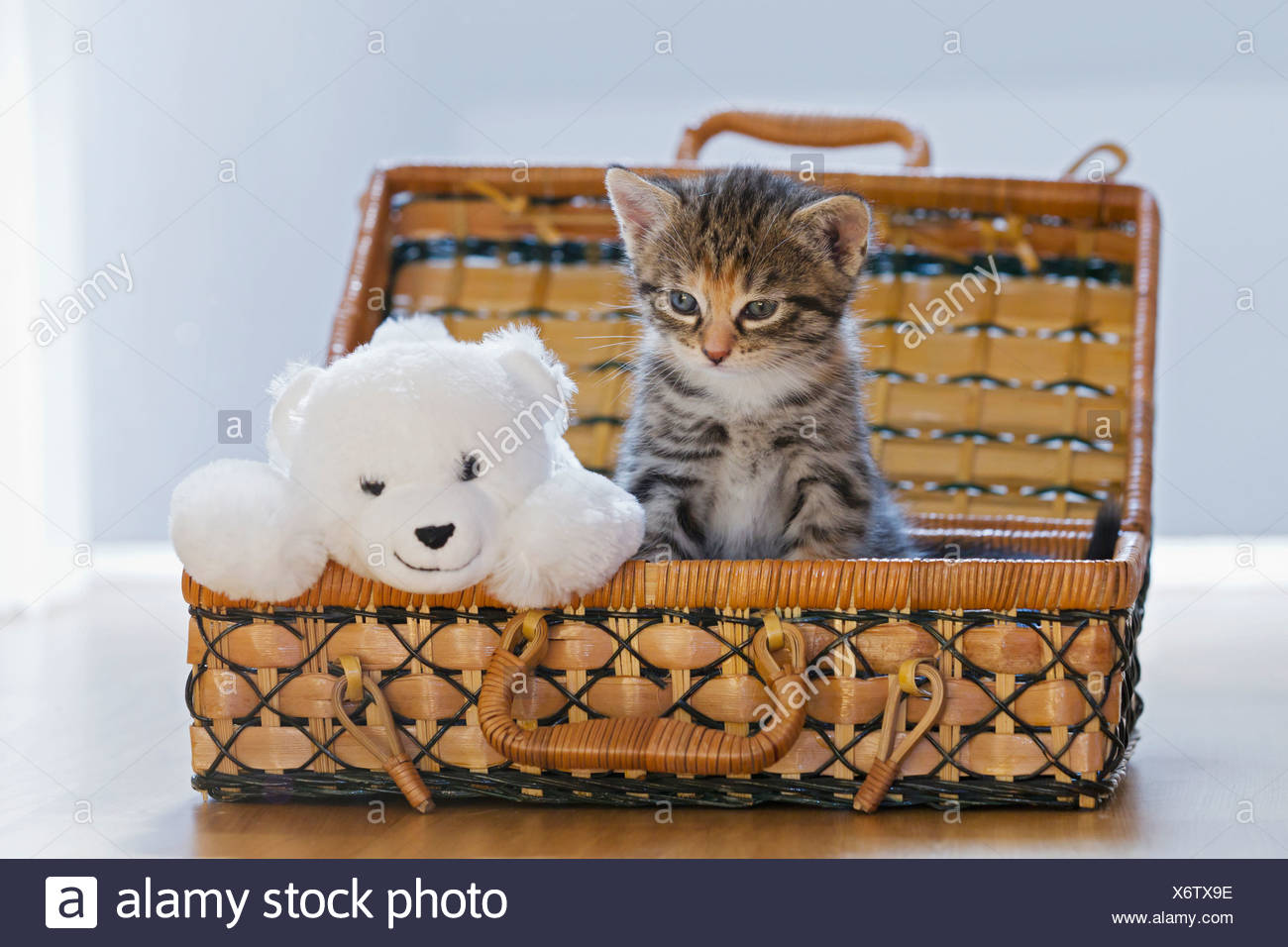 Germany, Kitten with soft toy in box, close up - Stock Image